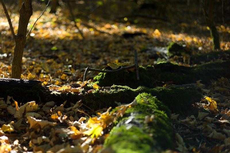Der Herbst mit klarem Blick im Fokus.